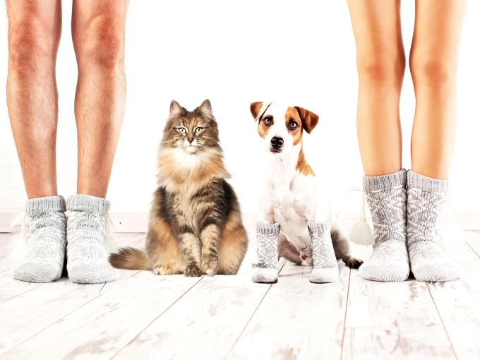Female and dog in socks